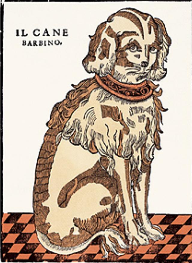 003BIS_-CANE_BARBINO