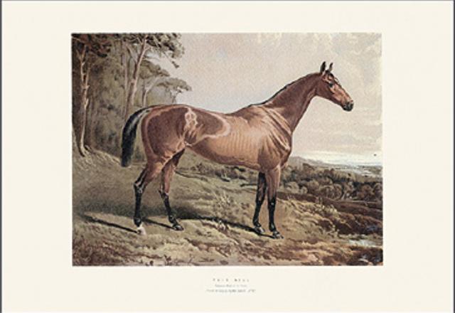 005_cavallo_marrone