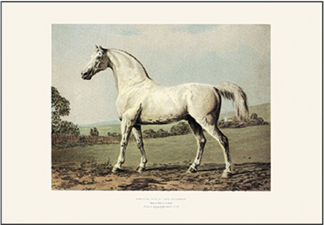 005bis_cavallo_bianco_
